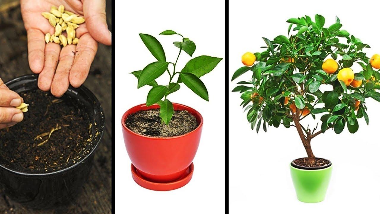15 Plante pe care poți să le crești ușor în bucătăria ta 3